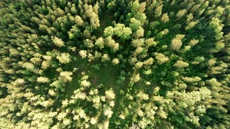 boomtoppen : Aerial vertical shot above treetops. Drone flies forward over forest. Slowly