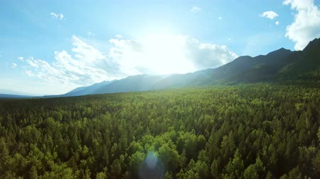 forest preservation : Aerial view of scenic mountain landscape at sunset. The sun lights up the treetops. Drone flies back above beautiful forest Stock Footage