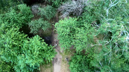 ciclismo : Aerial view of cycling in the park. Girl riding a bike on a forest trail. Vertical, top-down