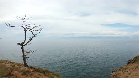 meditál : Girl sitting on a tree on the shore of lake Baikal. Aerial shot