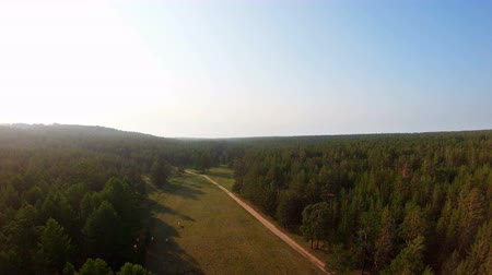 cow flies : Aerial view of beautiful forest, herd of cows and country road at sunset. Drone flies forward above the trees Stock Footage