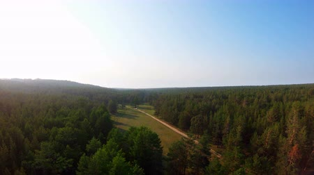 goes : Aerial view of beautiful forest, country road and car moving away at sunset. Drone flies to right Stock Footage