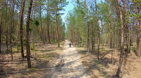 jodła : Girl walking on the forest road. Slow motion Wideo