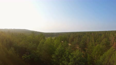 飛び散っ : Aerial view of beautiful forest, country road and car moving away at sunset. Drone flies up