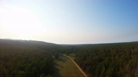 zálesí : Aerial view of the forest edge, woodland and a herd of cows in the distance, returning home at sunset Dostupné videozáznamy