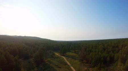 cow flies : Aerial view of the meadow with cows, forest and country road. Drone flies up and back