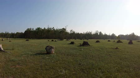 лесозаготовки : Deforested area with stumps. Felling of trees. The consequences of cutting down trees Стоковые видеозаписи
