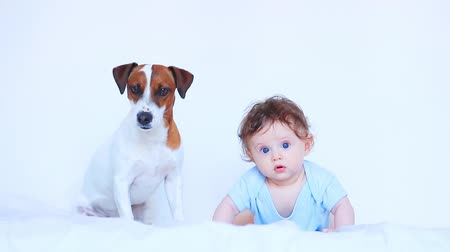 Little child boy with blue eyes and his friend dog on white background Stok Video