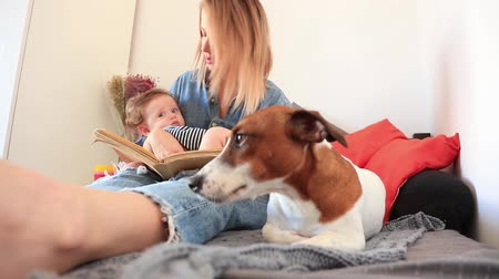 volný čas : Young mother and son with a dog sitting on a bed. indoor footage Dostupné videozáznamy