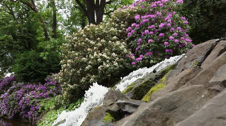 wrocław : Small waterfall with blossom flowers in botanic garden, in summertime. Wroclaw, Poland Wideo