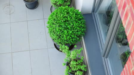erkély : Above view at balcony with plants in loft building Stock mozgókép