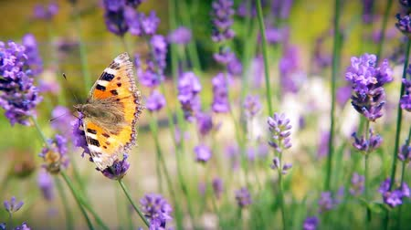 nikel : Butterfly and bees collect pollen of flowers