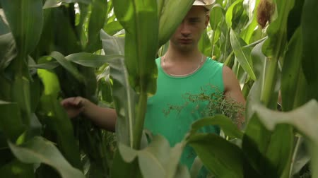 sponka : A young agronomist in a hat sneaks through a cornfield