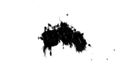 абсорбент : The black and white effect with a drop of ink HD