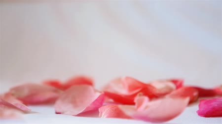 escarlate : Rose petals pink fall from top to bottom on white background Stock Footage