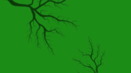 Appearance of tree branches on green background HD 1920x1080 Stock Footage