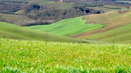 toskánský : Typical Tuscany landscape in Crete Senesi. Windy day with light moving effects on the field. Italy.