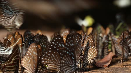 Butterflies are sucking food and flying near river in forest Stock Footage