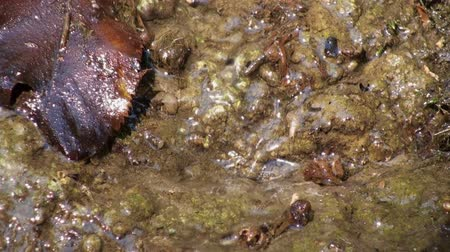 creek : Close up of tiny stream in mud ground. Stock Footage