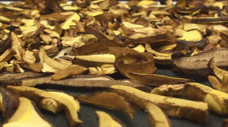 esquerda : Panning left to right  of drying wild mushrooms cut in thins slices 2.