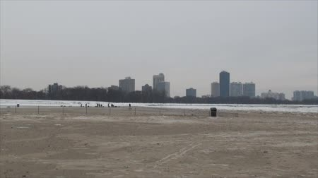 zwierzeta : Dogs on the frozen beach. Week of negative temperatures in Chicago. Three days after coldest day in 20 years. Wideo
