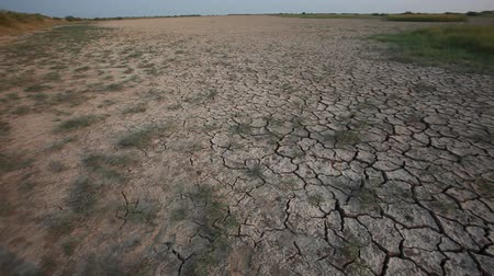 засуха : thirsty land with dry and cracked ground