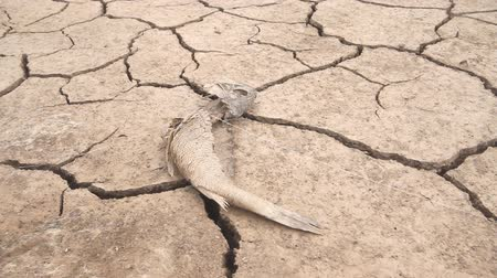 sucho : dead fish drought lake  heat