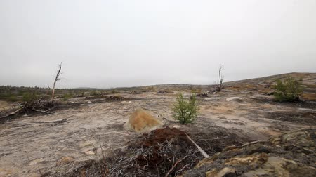 clareira : Destroyed by man Arctic tundra