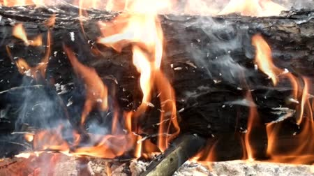 pyre : Forest fires. Burning the trunk of a pine