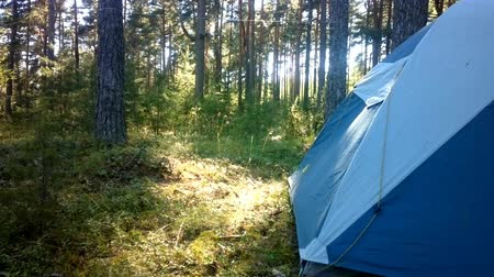 kamp : camping with a tent in the woods different options Stok Video
