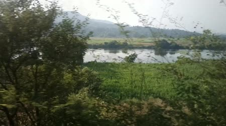 subtropics : Train travel throu India 2. Hey, plantations and thickets along the river bed (river Narmada)