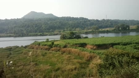 subtropics : Train travel throu India 3. Canals, meadows, hey, plantations and thickets along the river bed (river Narmada)