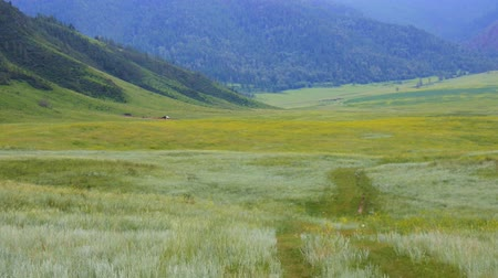 quaking : Want to live here. Attractive mountain valley with green grasses, quaking grasses, forest and small house, Altai mountains, Asia