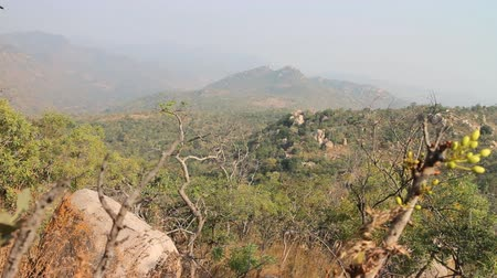subtropics : Dry, hilly Deccan plateau (India). Bush on slopes late winter, stalks on the dry branch Stock Footage