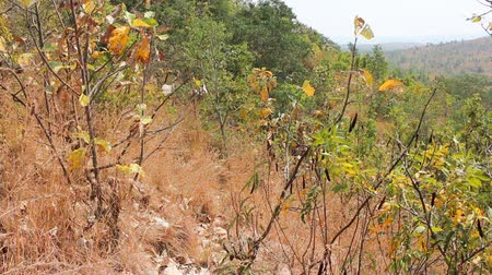 subtropics : Hilly Prairie (mountain steppe) of Deccan plateau (India). Bush on slopes late winter