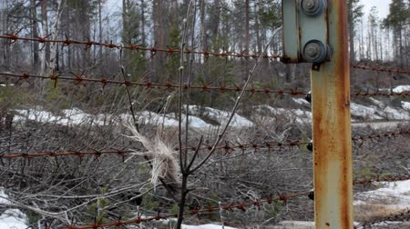 jumped : real border between States (frontier; state line). Barbed wire, elk jumped fence and ripped tuft of wool (tubular fur)