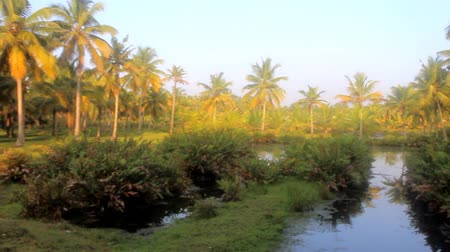 reclaim : Agriculture (agribusiness) and irrigation (reclamation operation) in India. Drainage channels in coastal swamps of Kerala. On drained areas grow coconut trees
