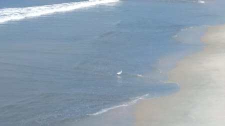 hern : Clean beach, lazy waves, white bird (egret). Advertisement holiday on tropical coast, Arabian sea Stock Footage