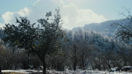sudden : Beautiful video. Sudden snow in subtropics. Snow-covered trees and silver drops