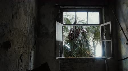 исчез : Smashed window of  forsaken house in tropics, outside window grows palm tree, raining, ghost town. Concept of not held Paradise, denied dreams, vanished hopes
