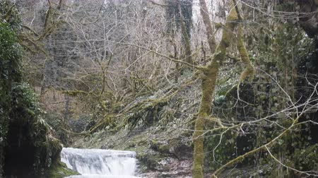 boxwood : Cascade falls in humid subtropical forests of Colchis, Caucasus. Boxwood, epiphytes, lianas. Wintertime