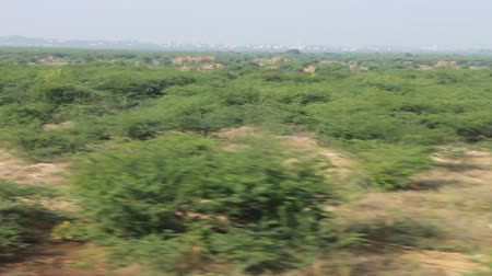 bushy : Asian Bush from window of fast speeding car. Acacia and other thorny plants