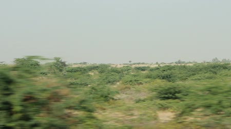 verdant : Asian Bush from window of fast speeding car. Acacia and other thorny plants
