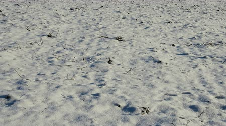 snowfield : First snow had barely covered field (two-inch fall of snow,  round snow cover). Traces of foxes, fresh sledge track Stock Footage