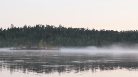 vago : Wild spectacular nature. Taiga river with strong current. Pine forest, island, morning, fog creeps over water.
