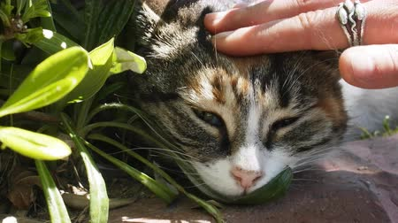 bigodes : happy cat is fondled among greenery under warm sun