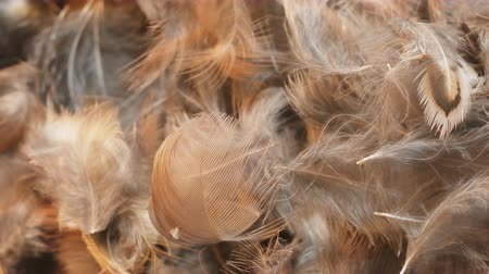 temas animais : Some mysterious animal moving under soft feathers of birds