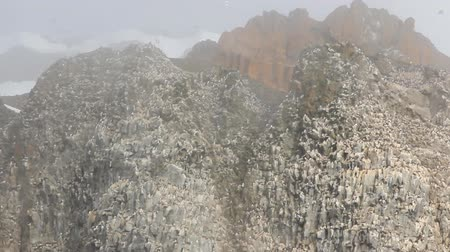 bionomics : Colonies of sea birds on snowy misty rocks of Franz Joseph Land archipelago. Voices of rookery