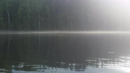 rozmazaný : Forest lake. Fog rises over water in summer morning, mirror finish water