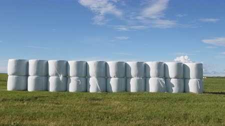 forragem : Hay clean and covered with safety film (vacuum packing) for winter storage, packing hay, haylage